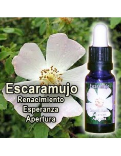 Escaramujo 15ml, Esencias...